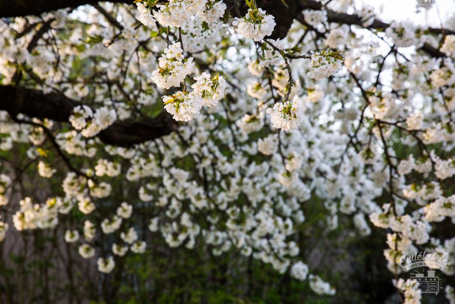 tavasz Emlékek Íze