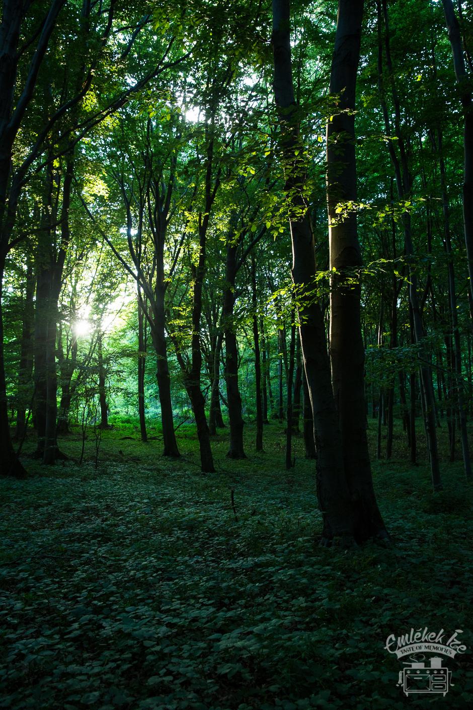 júniusi erdő- Emlékek Íze
