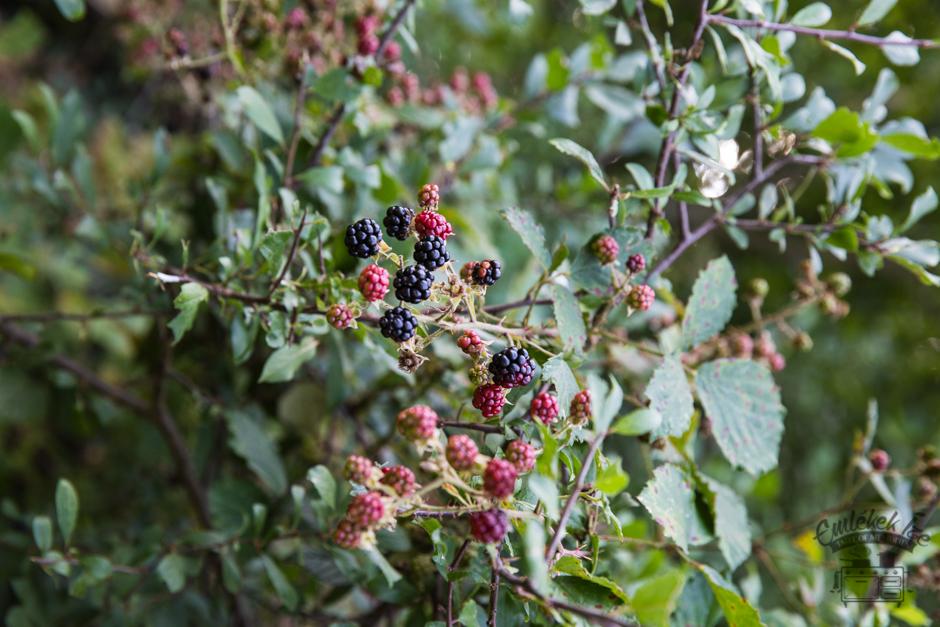 erdei szedres gyümölcstorta az Emlékek Íze konyhájából