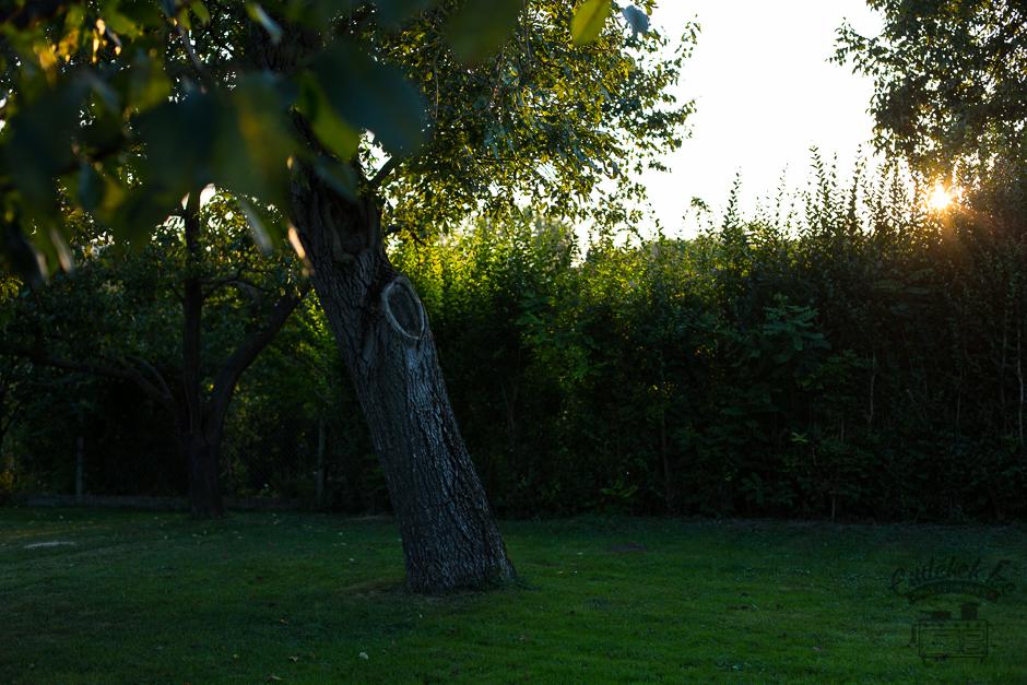 őszi kert Emlékek Íze