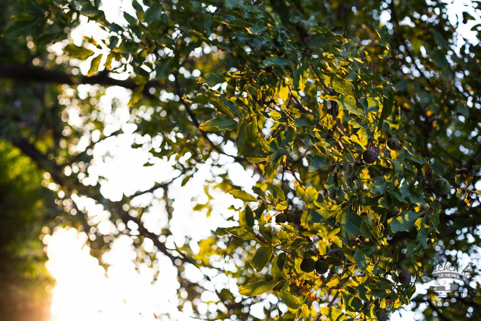 őszi kert- Emlékek Íze