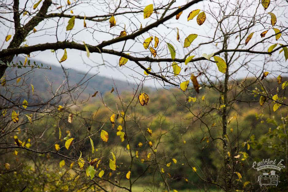 őszi erdő- Emlékek Íze, inspiráció az alma és csipkebogyó borhoz Sztori és recept: www.emlekekize.hu