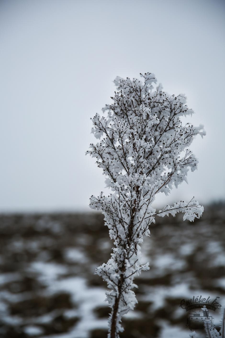 A világ monokrómban és színesben: kelt csöröge fánk