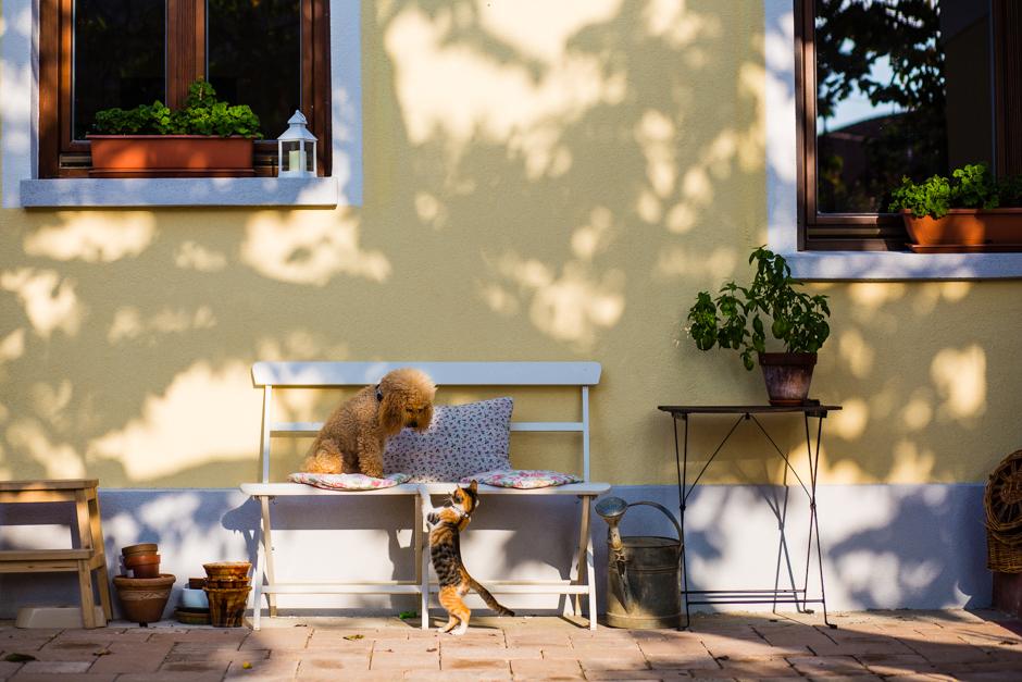 Beeper és Gata, otthon www.emlekekize.hu