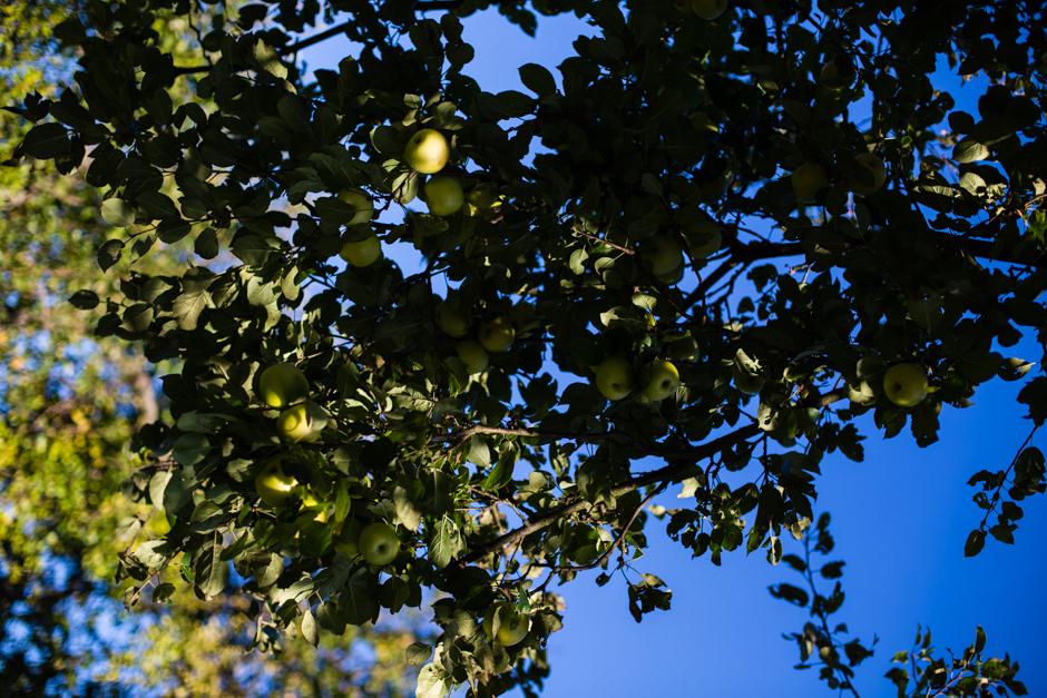 almalekvár az Emlékek Íze konyhájából www.emlekekize.hu