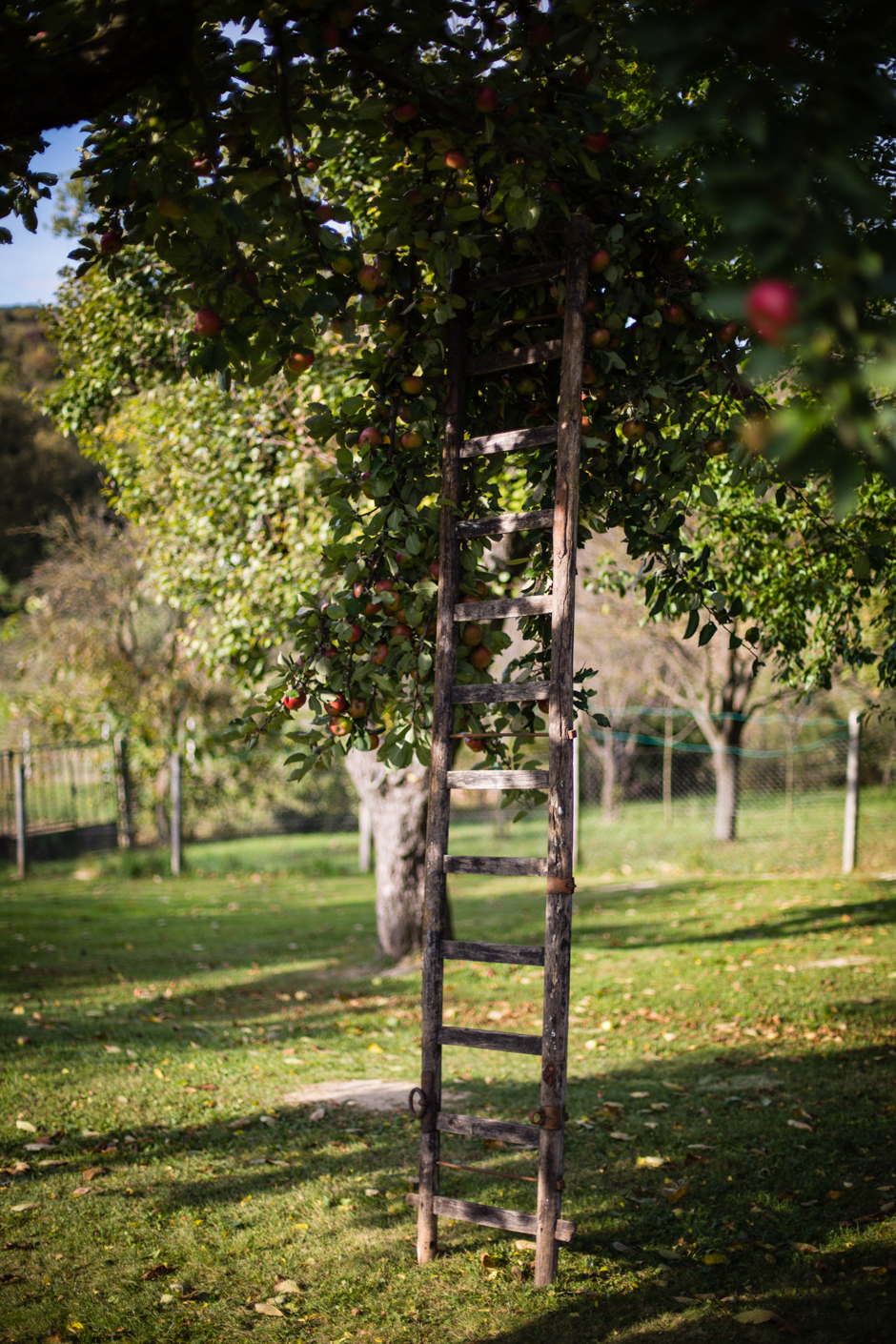 almabefőtt az Emlékek Íze konyhájából www.emlekekize.hu